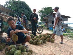 Enam Jenis Harga Buah Durian Tingkat Petani di Sekadau