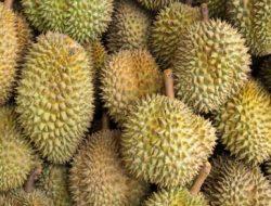 Durian Unggulan Kalimantan Barat Dilelang, Harganya Fantastis